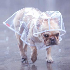 dog raincoat 9