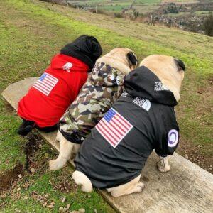7646 dog raincoat 2